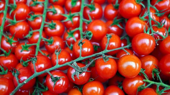 Pěstování keříčkových rajčat